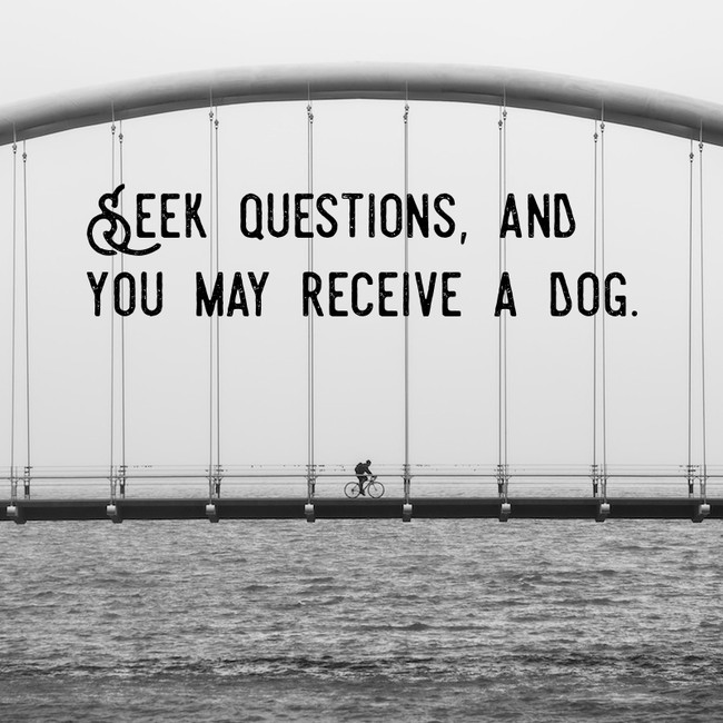 Seek questions and you may receive a dog
